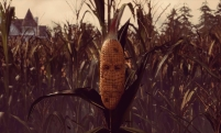maize-1920-screens-7