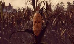 maize-1920-screens-7