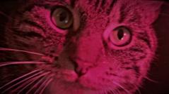 catcop